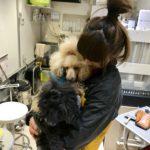 【働く人×デニム インタビュー vol.2】大好きな犬とのお仕事